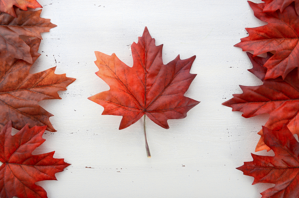 Canadian flag in leaves
