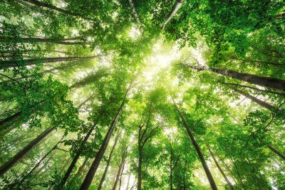 sustainability-higher-education-blog